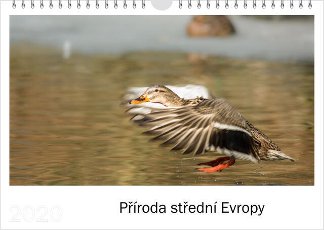 Kalendář A4 Příroda střední Evropy 2021 D - 1