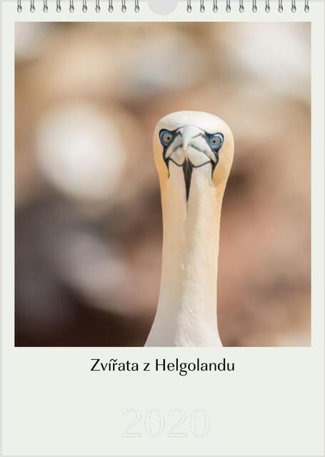 Kalendář A4 Zvířata z Helgolandu 2021 F - 1