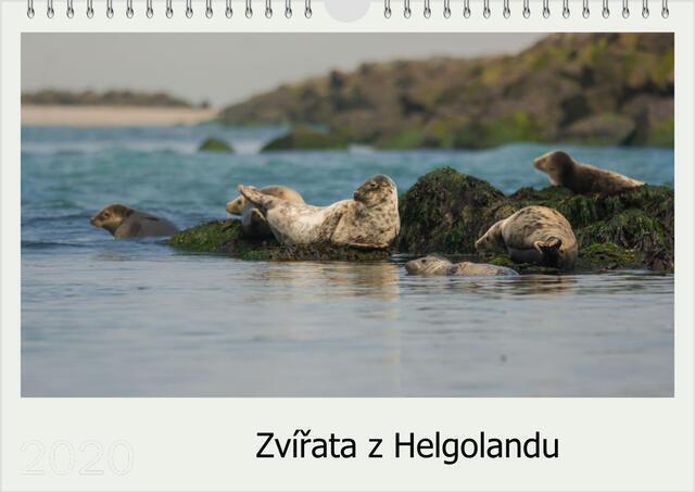 Kalendář A4 Zvířata z Helgolandu 2021 D - 1
