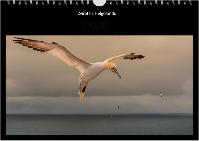 Kalendář A4 Zvířata z Helgolandu 2021 B - 1