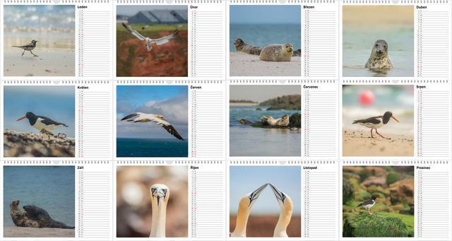 Kalendář A4 Zvířata z Helgolandu 2020 A - 2