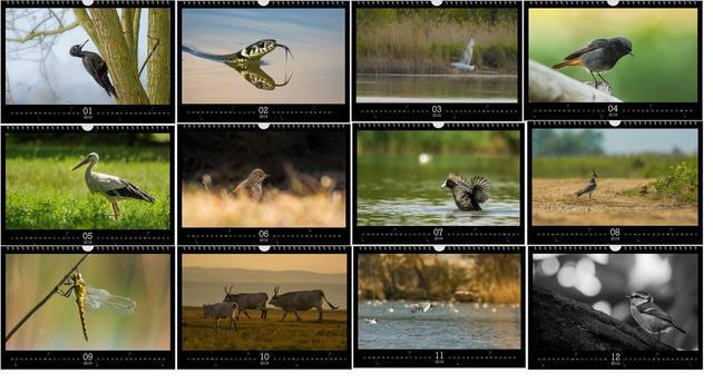 Kalendář A4 Příroda střední Evropy 2019 B - 2