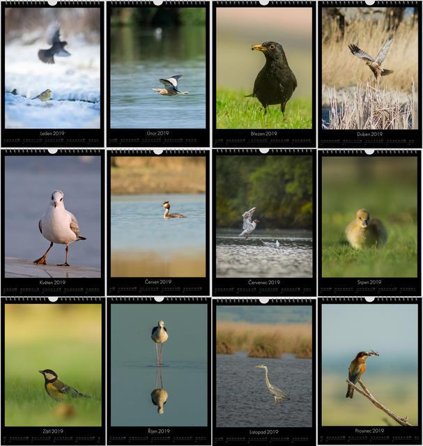 Kalendář A4 Příroda střední Evropy 2020 C - 2