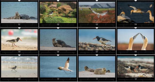 Kalendář A3 Zvířata z Helgolandu 2020 C - 2