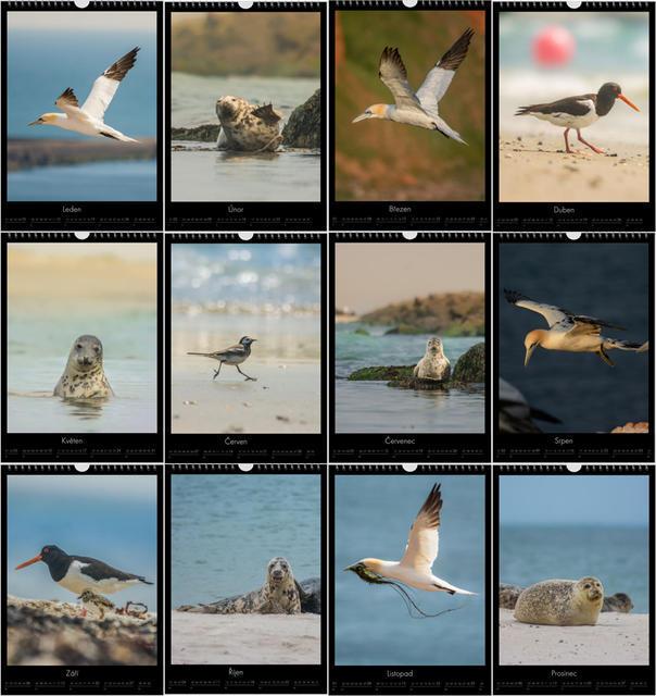 Kalendář A3 Zvířata z Helgolandu 2020 E - 2