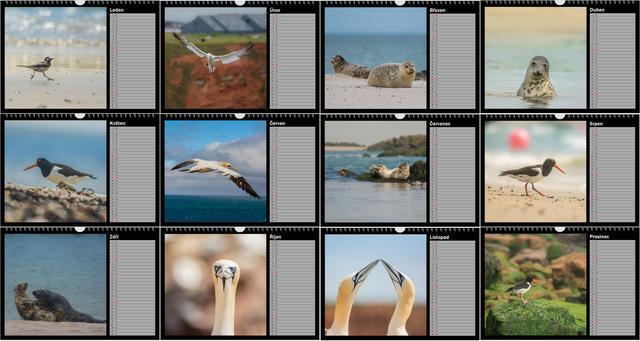Kalendář A4 Zvířata z Helgolandu 2020 B - 2