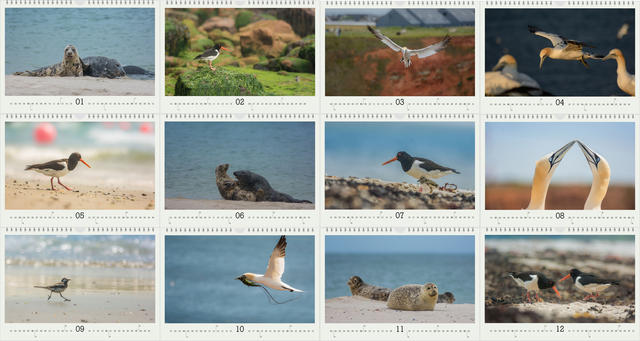 Kalendář A4 Zvířata z Helgolandu 2021 D - 2