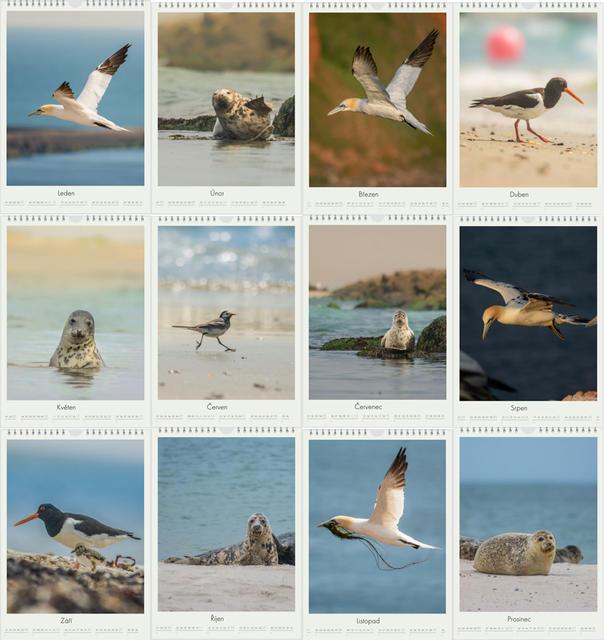 Kalendář A4 Zvířata z Helgolandu 2020 F - 2