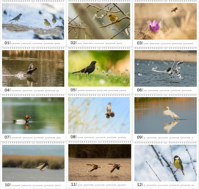 Kalendář A4 Příroda střední Evropy 2021 D - 2