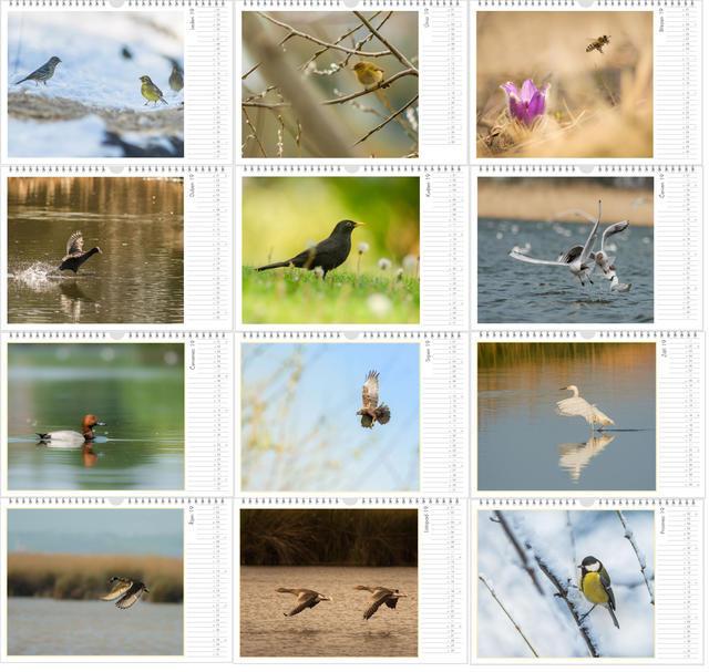 Kalendář A4 Příroda střední Evropy 2020 E - 2
