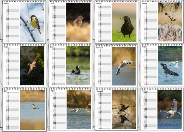 Kalendář stolní Ptáci České republiky 2021 A - 2
