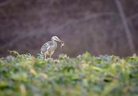 Jak snadno fotit ptáky v poli