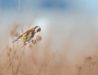 Jak fotím zvířata v zimě