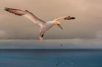 Ostrov Helgoland - Ráj pro focení terejů
