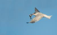 Proč navštívit Azorské ostrovy - část 6: Pozorování ptáků