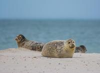 Ostrov Düne - Setkejte se s tuleni