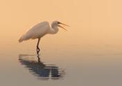 Proč ráda jezdím fotit k Neziderskému jezeru