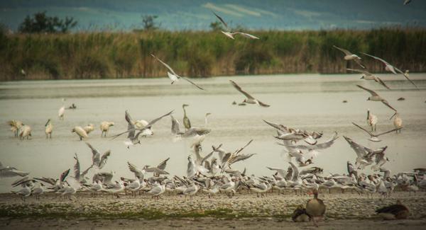 Neziderské jezero